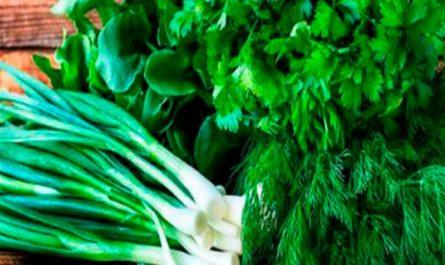 12 Способов сохранить зелень свежей надолго