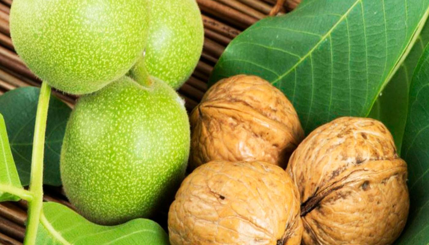 Грецкий орех, полезные свойства, применение