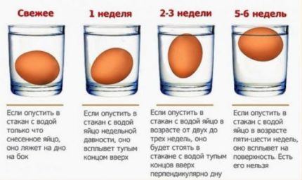 Определить свежесть яйца.